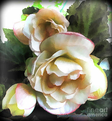 Photograph - Creamy Begonia - Square by Luther Fine Art