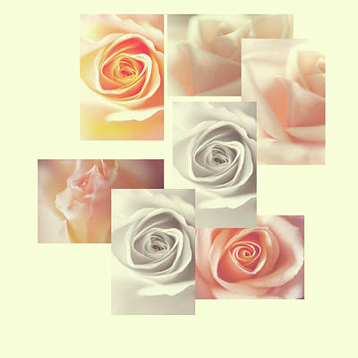 Photograph - Creamy Dreamy Roses Collage by Jenny Rainbow