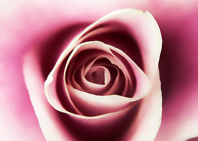 Photograph - Creamy Pink by Nathan Little