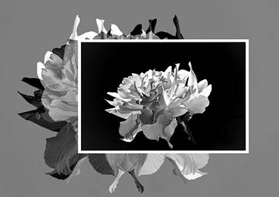 Photograph - Creative Daffodils by Regina Arnold