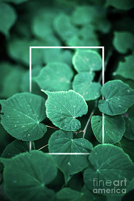 Photograph - Creative Foliage Layout With Thin White Frame. by Michal Bednarek