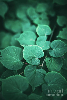 Photograph - Creative Green Leaf Foliage Layout by Michal Bednarek