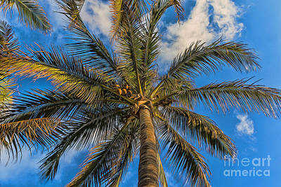 Photograph - Creative Palm Tree by Darleen Stry