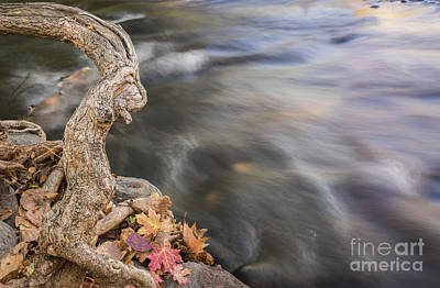 Photograph - Creature At Oak Creek by Marianne Jensen