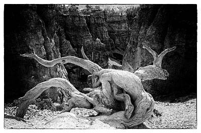 Photograph - Creatures Of Bryce Canyon by Jim Cook