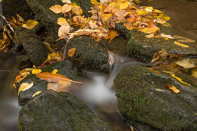 Photograph - Creek 2 by Joye Ardyn Durham