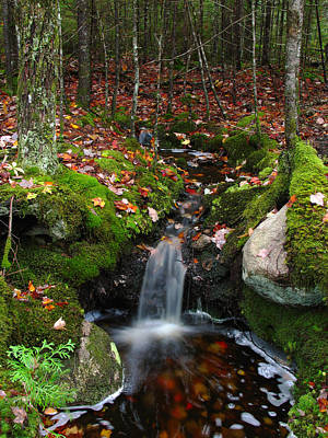 Waterfall Photograph - Creek Acadia National Park by Juergen Roth