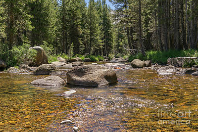 Photograph - Creek Along Tioga Pass Yosemite California Dsc04306 by Wingsdomain Art and Photography