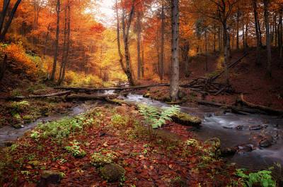 Photograph - Creek At Autumn Forest by Nickolay Khoroshkov