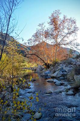 Creek At Sabino Canyon Art Print