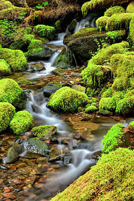 Photograph - Creek At Sol Duc by Spencer McDonald