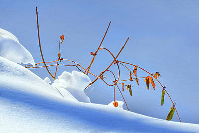 Photograph - Creek Bank In Winter by Carolyn Derstine