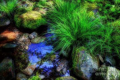 Creek Beds Photograph - Creek Bed by Michael Eingle