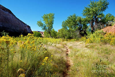 Photograph - Creek Bed Path Moab by David Arment