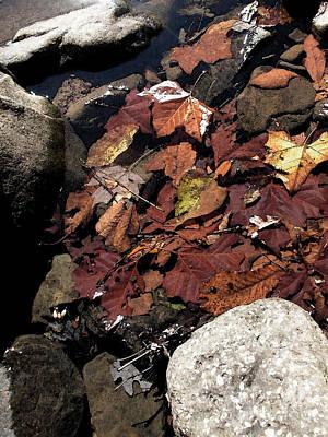 Creek Bottom At Richland Creek Print by Steve Grisham