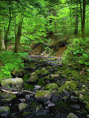 Photograph - Creek Crossing In Ma by Raymond Salani III