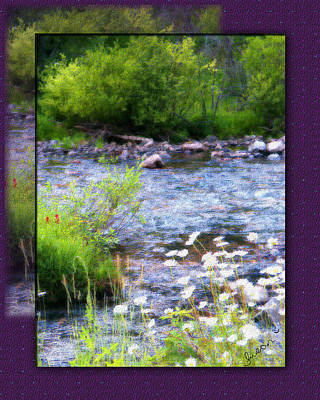 Art Print featuring the photograph Creek Daisys by Susan Kinney