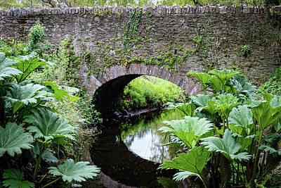Creek Flora - Blarney Ireland Art Print