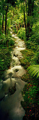 Creek Flowing Through A Rainforest Print by Panoramic Images