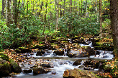 Photograph - Creek In The Forest by Jill Lang