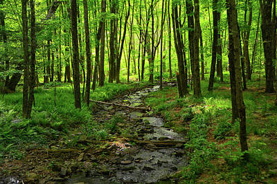 Photograph - Creek Leading To The Delaware River by Raymond Salani III