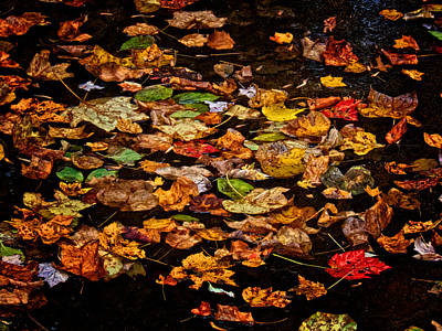 Photograph - Creek Leaves by Kathi Isserman