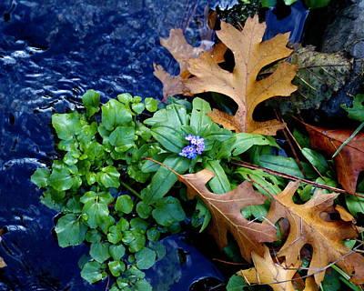 Creek Life Original
