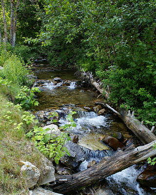 Art Print featuring the photograph Creek On Mt. Spokane 1 by Ben Upham III