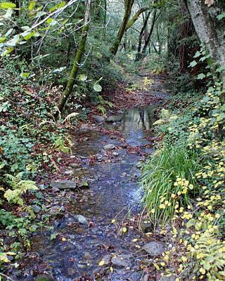 Creek On Mt Tamalpais 2 Art Print