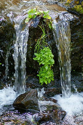 Photograph - Creek Peace by Ben Upham III