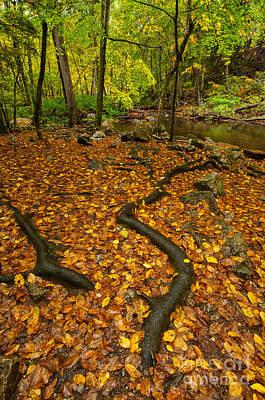 Creek Roots - Autumn Woodlands Art Print by JG Coleman