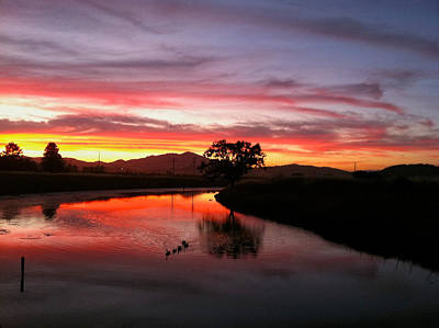 Photograph - Creek Sunset by Dan Reich