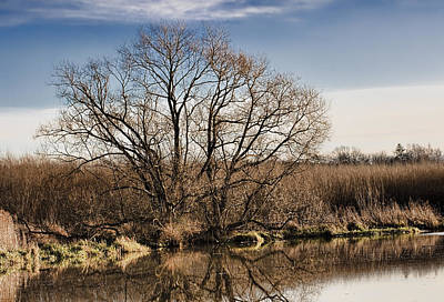 Creek Tree Art Print by Leif Sohlman