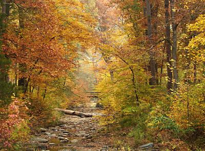 Creekbed At Beavers Bend Original by Carolyn Fletcher