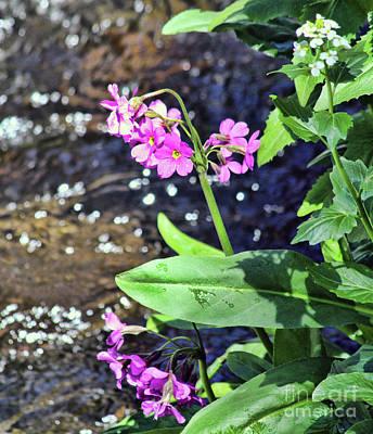 Photograph - Creekside Flora by Steven Parker