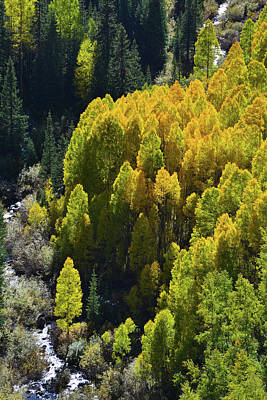 Photograph - Creekside Glowing Aspens Along Million Dollar Highway by Ray Mathis