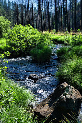 Photograph - Creekside In The Cool Pines  by Saija Lehtonen