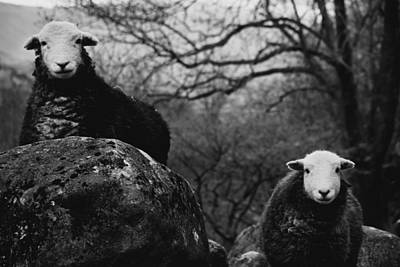 Photograph - Creep Sheep by Justin Albrecht