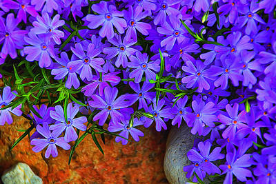 Photograph - Creeping Phlox 1 by Dennis Lundell