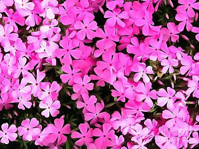 Photograph - Creeping Phlox - Bubblegum Pink by Janine Riley
