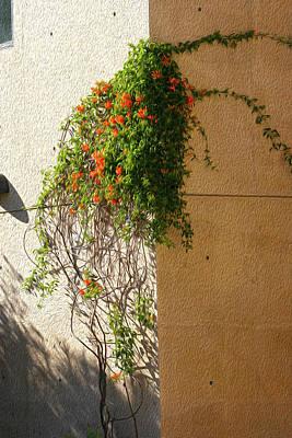 Creeping Plants Art Print