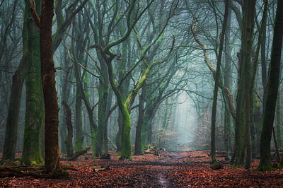 Winter Netherlands Photograph - Creepy Forest by Martin Podt