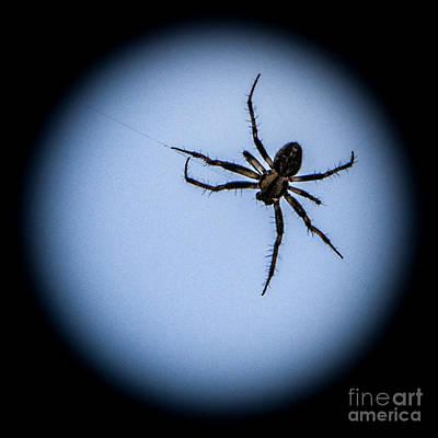 Photograph - Creepy Spider by Grace Grogan