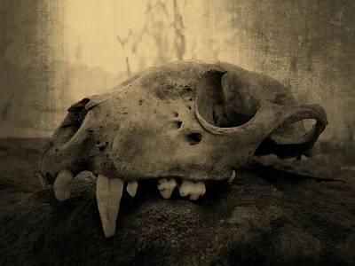 Photograph - Creepy Teeth by Kyle West