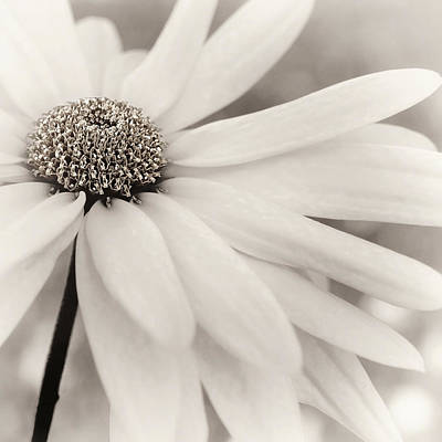 Photograph - Creme Fraiche In Black And White by Darlene Kwiatkowski