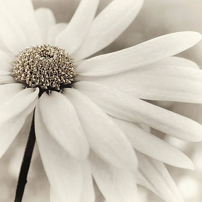 Photograph - Creme Fraiche In Gold And White by Darlene Kwiatkowski