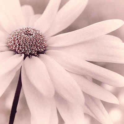 Photograph - Creme Fraiche With Hint Of Pink by Darlene Kwiatkowski