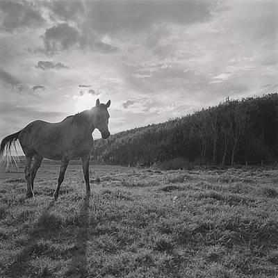 Pferd Wall Art - Photograph - Creo Que Me Fanaticé Con Los Caballos by Por Donde Paso
