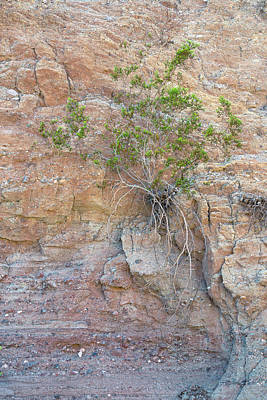 Photograph - Creosote And Canyon Wall by Alexander Kunz