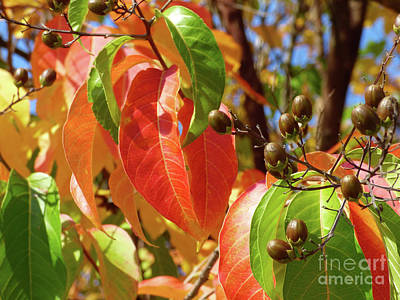 Photograph - Crepe Myrtle Autumn Color by Jean Wright